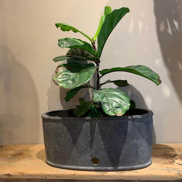 Brynxz oval planter 6221M