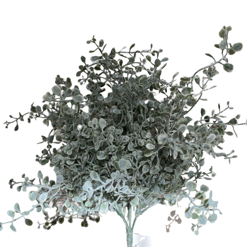 ginko bush